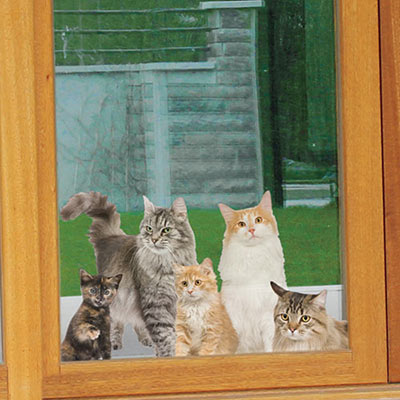 Welcome Home! Kitties Cling