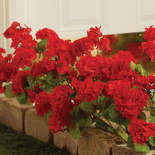 All-Weather Forever Blooms - Red Geranium