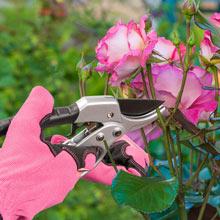 Pruning Gardening Gloves - Pink - Medium