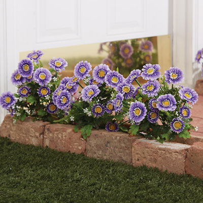 All-Weather Forever Blooms - Purple Daisy