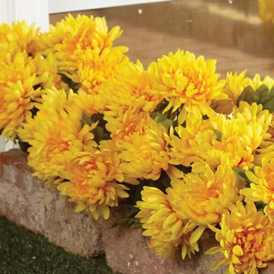 All-Weather Forever Blooms - Yellow Mums