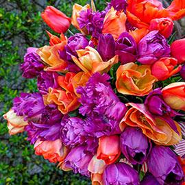 Pinot Noir Tulip Blend
