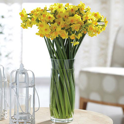 Paperwhite Narcissus Grand Soleil d'Or