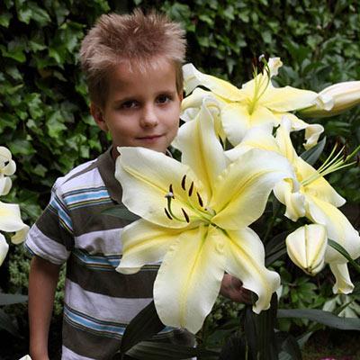 Giant Orienpet Lily Conca d'Or