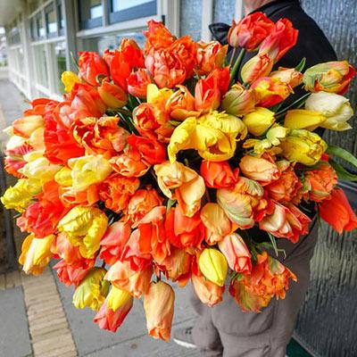 Cava Sangria Tulip Blend