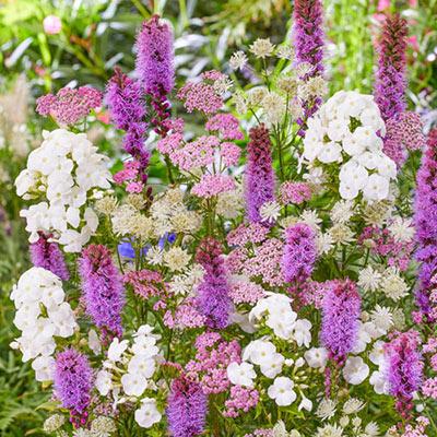 Bridal Bouquet Perennial Blend