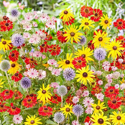 Flower Power Perennial Blend