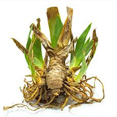 Dormant Plants 1
