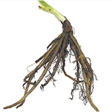 Dormant Perennials 1