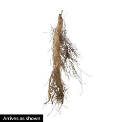 Native Milkweed Plant Selections