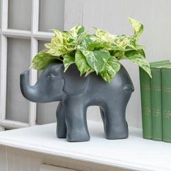 Good Fortune Elephant Planter
