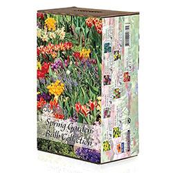 Spring Garden Bulb Collection
