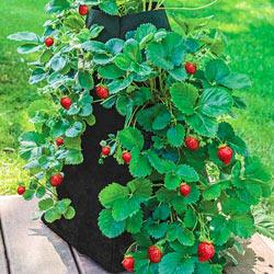 Grow Tub™ Strawberry Tower™
