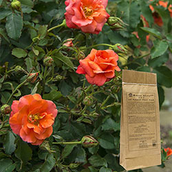 Roses Alive!™ 3 Lbs
