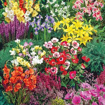 Importance of ornamental plants
