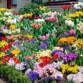 Spring Garden Bulb Collection Michigan Bulb Company