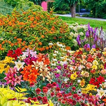 Charmant Butterfly Garden Kit