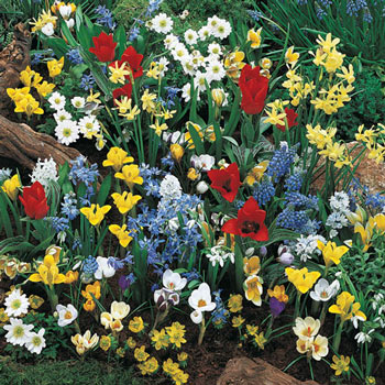 Wildflower Bulb Garden Super Bag