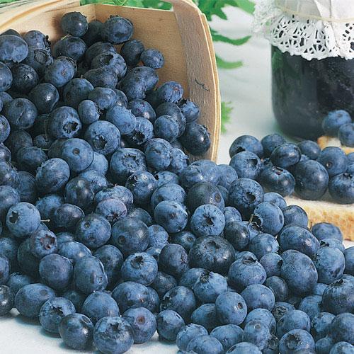 Blueberry Trio