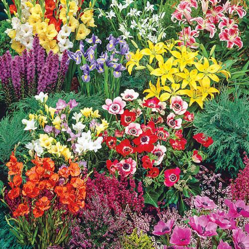 Border Summer Flowering Garden