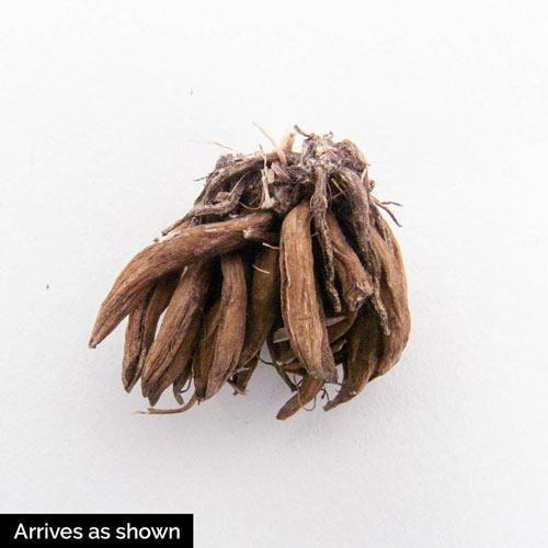 Mixed Ranunculus