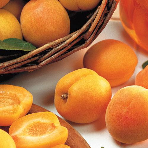 Bush Apricot