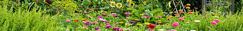 How to Gardening Article Library