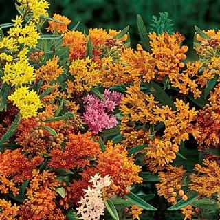 Image Result For Pre Planned Flower Garden Kits